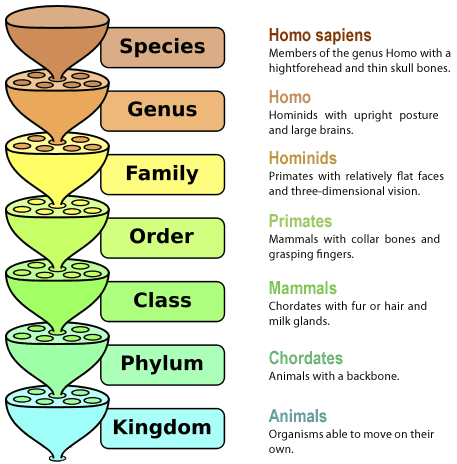Taxonomy Terminology of species