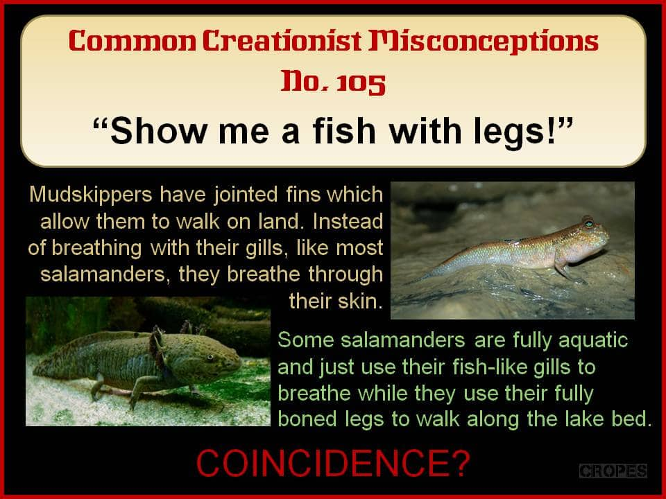 Creationist misconceptions no 105 show me a fish with for Show me pictures of fish