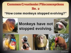 How come monkeys stopped evolving?